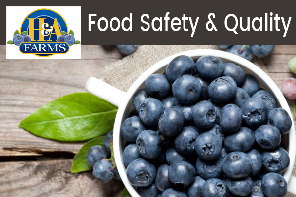 H&A Farms Food Safety & Quality with blueberries